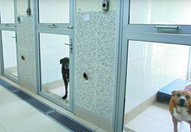 Mais de 200 gatos e cães esperam por adoção em São Paulo