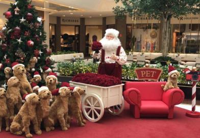 5 shoppings da Grande São Paulo têm fotos de Natal para animais