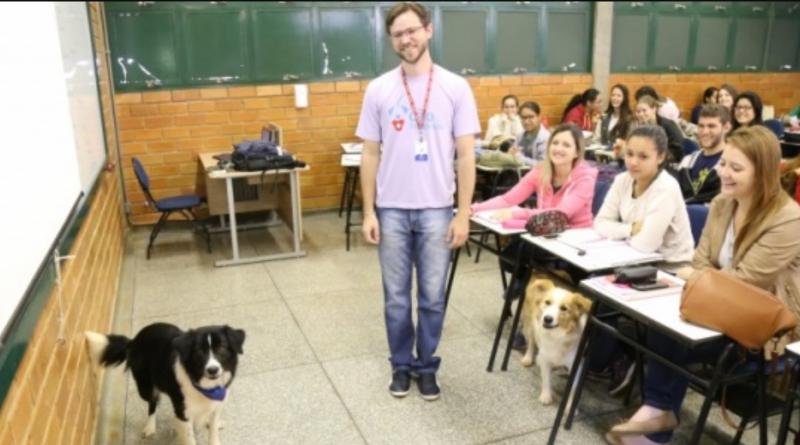 Professor leva cães para a sala e ensina cuidados e afeto aos alunos