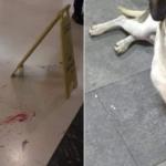 Cachorro é brutalmente morto no Carrefour de Osasco