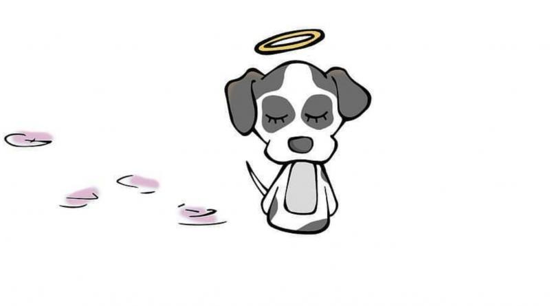 A vida animal e sua fragilidade: o que há por trás do cachorro agredido no Carrefour