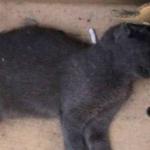 Carrefour da Barra é impedido pela Justiça de matar gatos