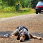 Abandono de animais aumenta 50% com chegada das férias