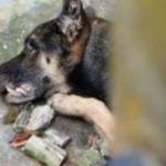 Família viaja e cão morre de fome e sede