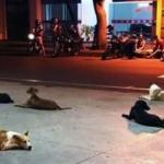 Cachorros aguardam por morador de rua que foi internado em hospital