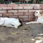 Crise faz venezuelanos abandonarem seus animais de estimação