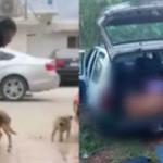 Mexicano que esfaqueou cachorro em bar é encontrado morto com mais de 50 facadas