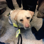 Um homem cego registra a humilhação que passa todos os dias com seu cão-guia