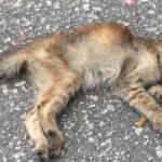 Após envenenamento de 15 gatos, Carrefour planeja construção de gatil
