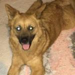 Cachorro abandonado, Santos