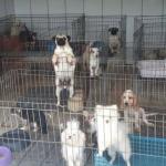 Ambiental interdita canil com mais de 1,5 mil cães por maus-tratos em Piedade