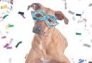 6 razões para não levar seu cão aos blocos de Carnaval