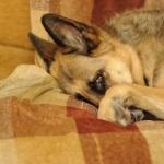 Brasil poderá ter Disque Denúncia para maus-tratos contra animais