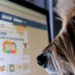 Facebook proíbe vendas de animais