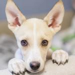 Evento promove adoção de mais de 100 cães em São Paulo neste final de semana