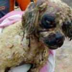 Polícia Civil investiga morte de cadela após ataque com ácido