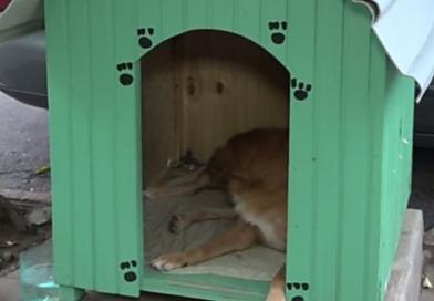 Prefeitura de Porto Alegre dá prazo para retirada das casinhas de cachorro