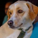 Santos terá 'farmácia popular' para pets