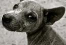 Saiba como denunciar passo a passo, maus-tratos praticados contra animais