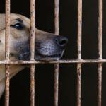 Brasil tem mais de 170 mil animais abandonados sob cuidados de ONGs
