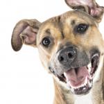 Dia dos animais: a realidade de ter um pet