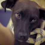 Reality show sobre animais abandonados estreia na RedeTV!