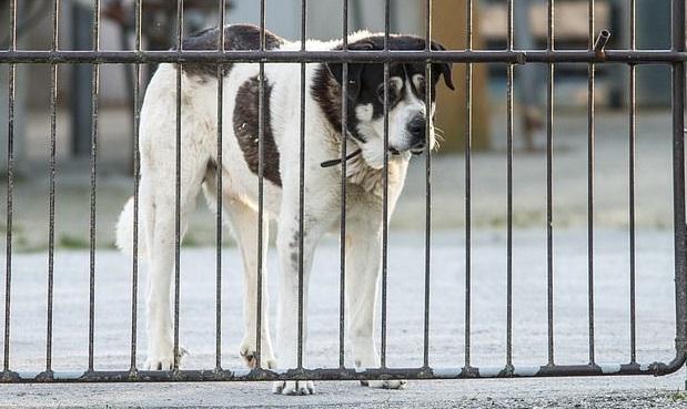 Abandono de animais nas festas de final de ano preocupa ONGs