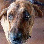 Cachorro infarta e morre durante queima de fogos de artifício