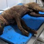 Cães explorados em rinha eram assados para consumo