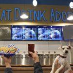 Bar funciona também como lar provisório para cães resgatados