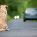 Abandono de animais cresce até 65% no fim do ano