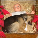 Cachorrinho abandonado comove ao encontrar conforto em Presépio de Natal