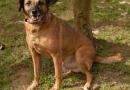 Cão símbolo da luta contra a vivissecção aguarda um lar há quatro anos