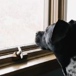 Nunca deixe um cachorro sozinho por muito tempo