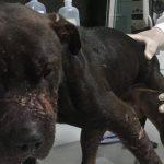 Juiz mantém prisão de apenas 1 dos 41 detidos em rinha de cães