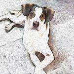Carrefour ajuda mais de 450 abrigos de animais após caso Manchinha