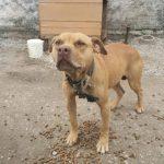 Caso de rinha de cães em Mairiporã (SP) repercute na mídia internacional