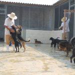 Ideia pioneira põe presos em ressocialização cuidando de animais abandonados