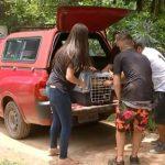 Cachorros de rinha serão cuidados também em Peruíbe, SP