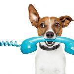 Cubatão disponibiliza Disque-Denúncia contra maus-tratos e abandono de animais