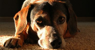 Viajar e deixar animais sozinhos em casa configura crime de abandono