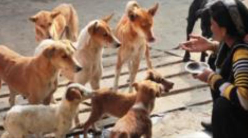 Estudo com cães de rua revela que eles nascem prontos para nos entender