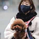 Coronavírus pode ser transmitido a animais, alerta epidemiologista