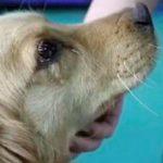 Cadela 'chora de gratidão' após salvarem-lhe a vida