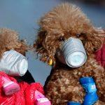 Exames em cachorro detectam baixos níveis de coronavírus