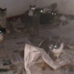 Polícia Ambiental descobre casa com 400 gatos em PG