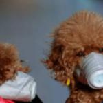 Cão tem resultado positivo para coronavírus e vai para quarentena