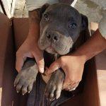 Menino deixa cão em abrigo para o proteger do pai