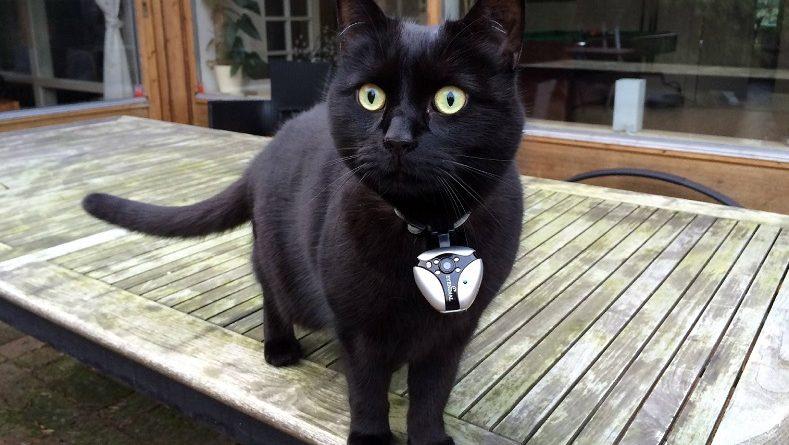 Miados podem ter sotaque de acordo com região onde os gatos vivem