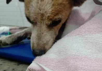 Mais de 50 cães são envenenados e mortos em lar temporário